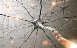 neurons-120208