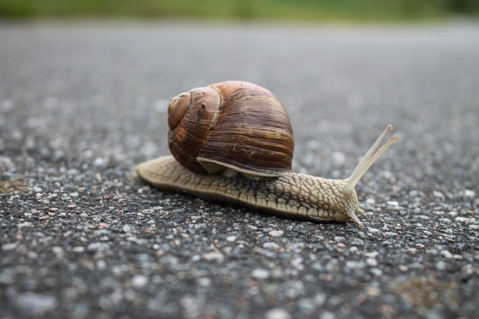 snail-1844618_960_720.jpg